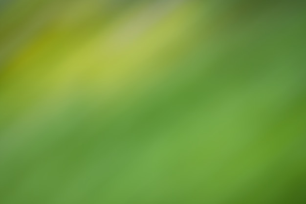抽象的な自然の緑の背景。空の緑のボケ味と緑の葉の背景。
