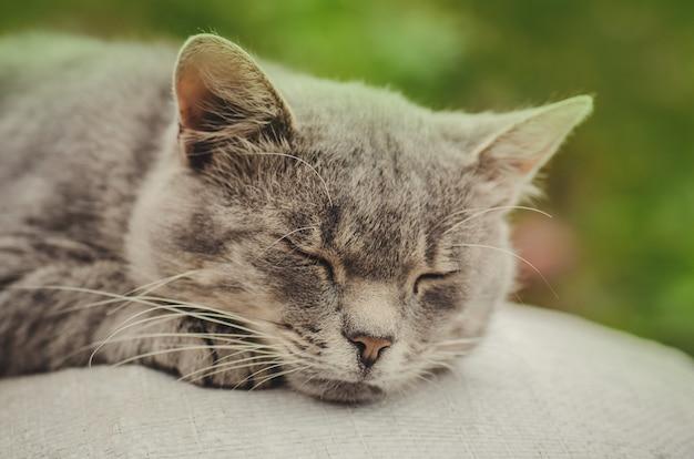 Кот отдыхает, хороший кот на земле