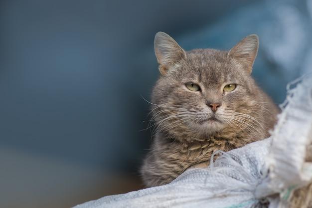 Деревенский кот отдыхает, любопытный кот в деревне