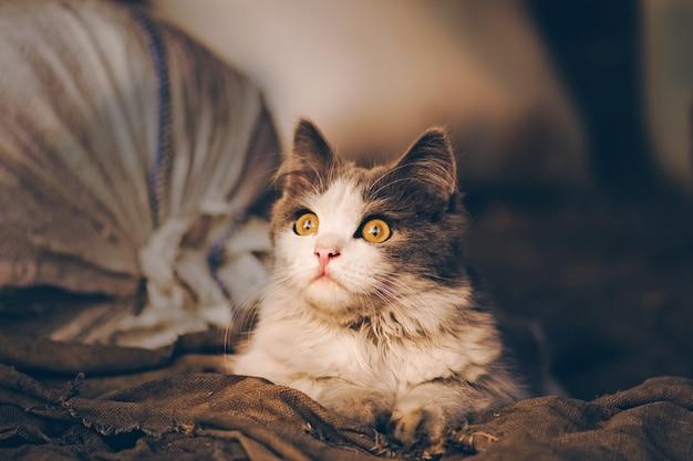 Деревенский кот отдыхает… взрослый деревенский кот на ферме