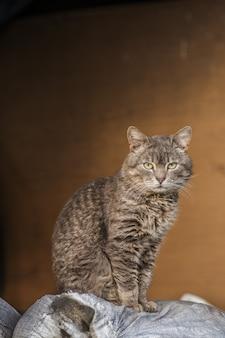 Симпатичная фермерская кошка. взрослая деревенская кошка на ферме.