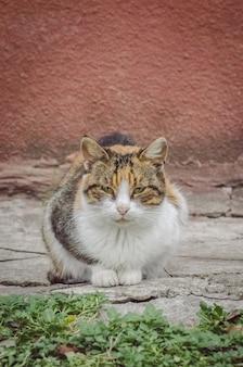 Взрослая деревенская кошка отдыхает на ферме