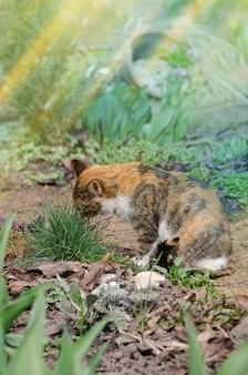 庭の芝生のフィールドに横たわっている猫