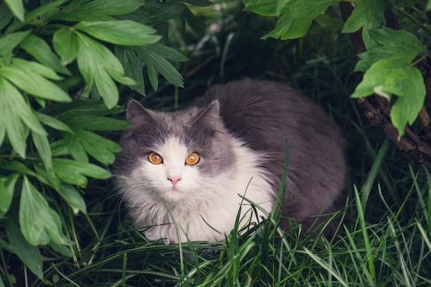 黄色い目を持つ美しい猫の肖像画