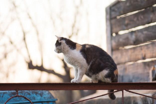 Взрослая деревенская кошка на ферме