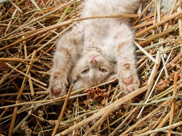 Портрет кота на ферме в сене