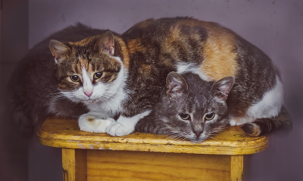 Две кошки спят в доме