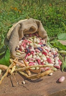 さまざまな種類の豆の背景