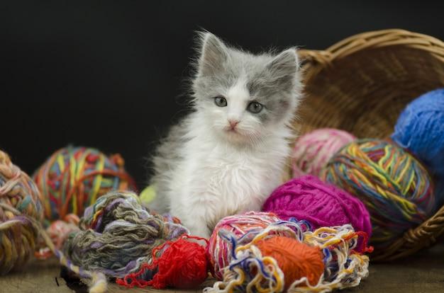 黒の背景に糸のボールとかわいい子猫。
