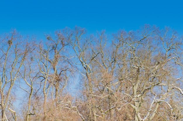 Ветка без листьев в голубом небе