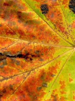 カラフルな背景の秋の葉のクローズアップ
