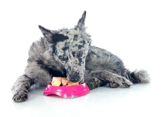 ハンガリーの犬を食べる