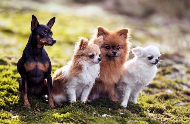 Собаки в природе