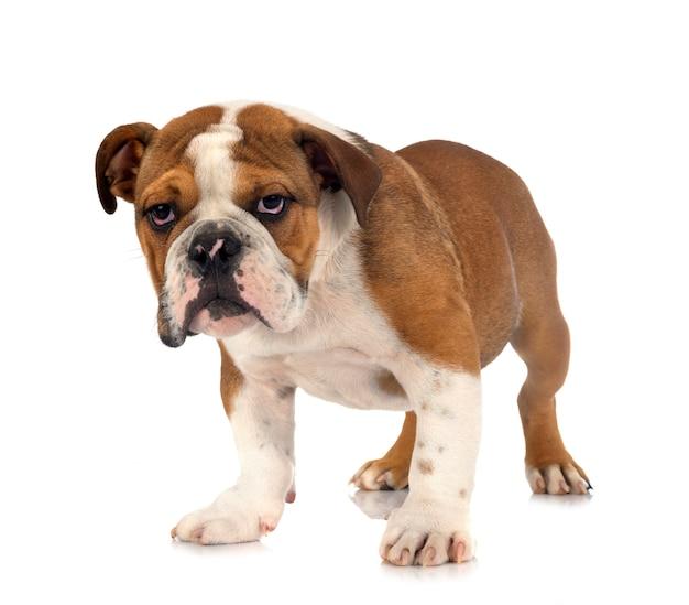 分離されたアメリカのいじめ犬