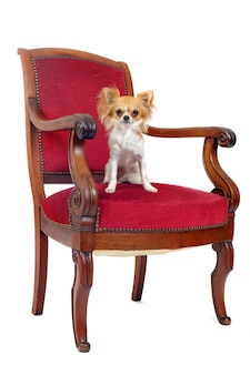 アンティークの椅子とチワワ