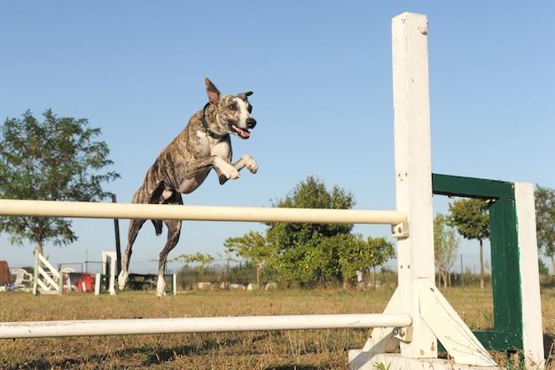 Прыгающий гонщик