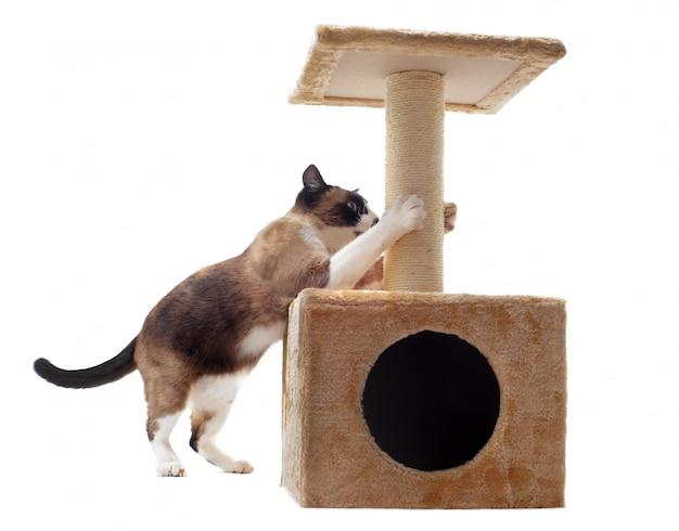 Царапающий кот