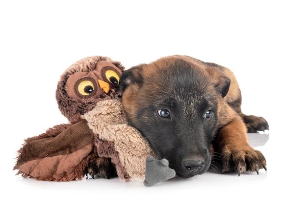 分離された子犬マリノア