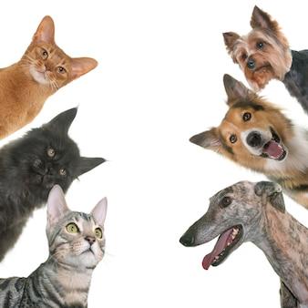 ペットのグループ