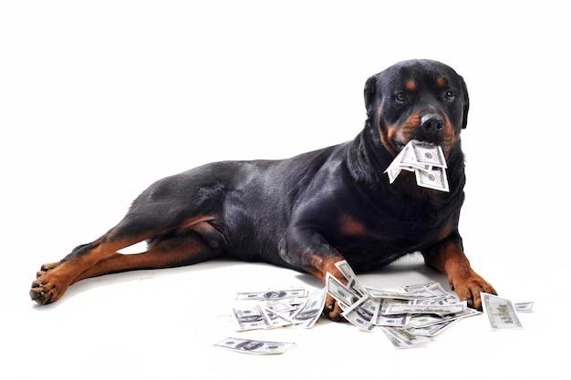 Ротвейлер и доллары