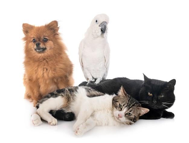野良猫のスピッツとオウム