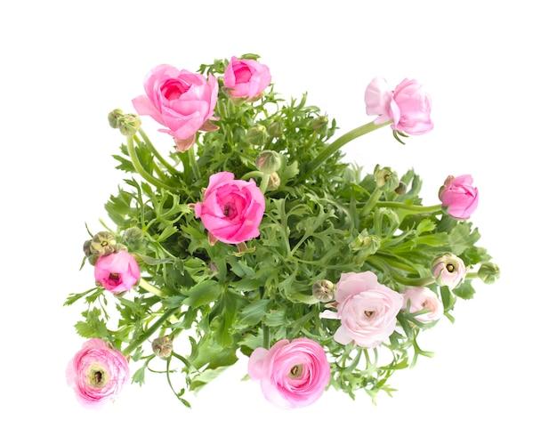 Розовые лютики в студии