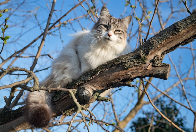 Рэгдолл кот в дереве