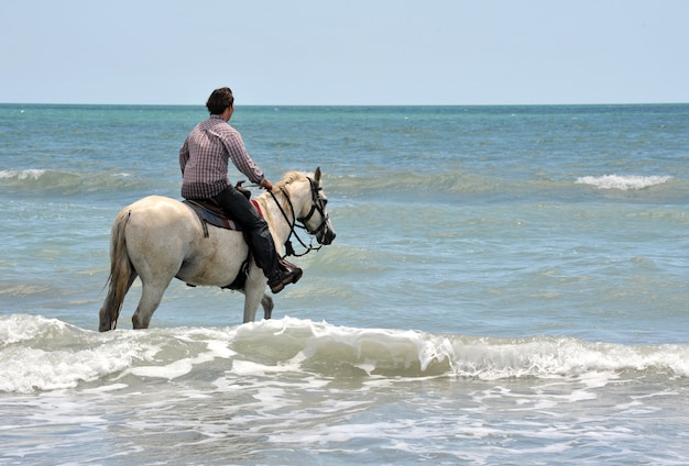 人と海の馬