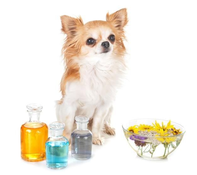 犬とエッセンシャルオイル