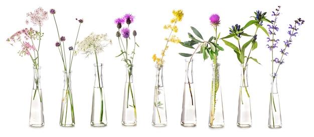 試験管内の植物