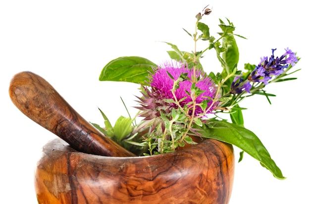 モルタルと植物