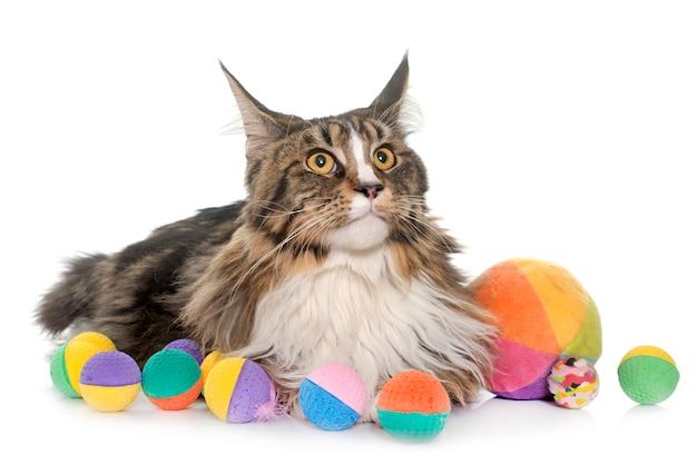 メインクーン猫とおもちゃ