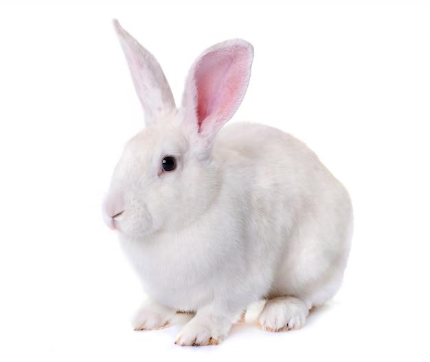 スタジオでウサギ
