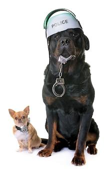 警察犬チワワとロットワイラー