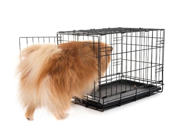 檻の中の小さな犬