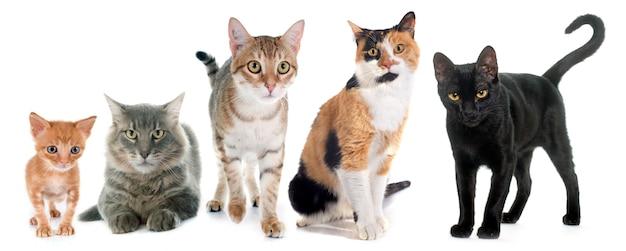 猫のグループ