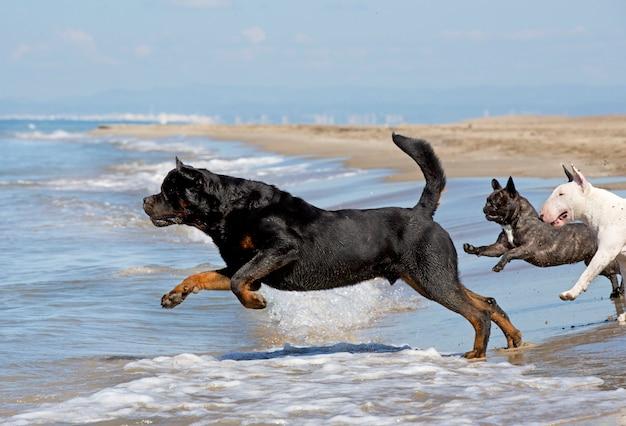 犬がビーチを走る