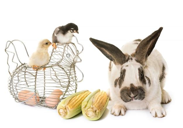 市松模様の巨大なウサギとひよこ