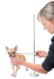 犬用メジャーロッド