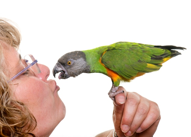 Сенегальский попугай целует своего хозяина