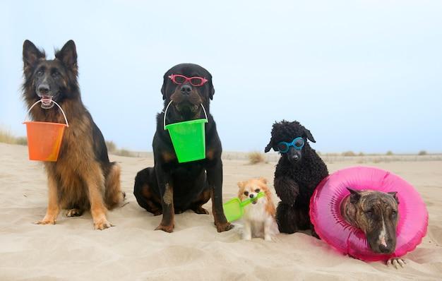 ビーチで犬