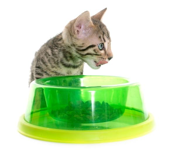 ベンガル子猫を食べる