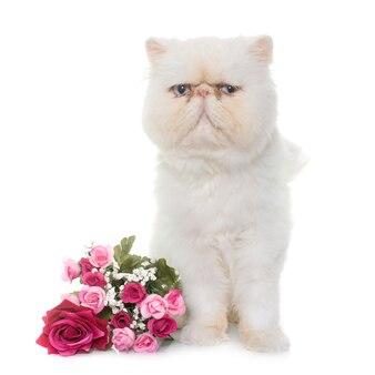 白いペルシャ猫