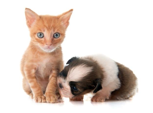 子犬しずと子猫