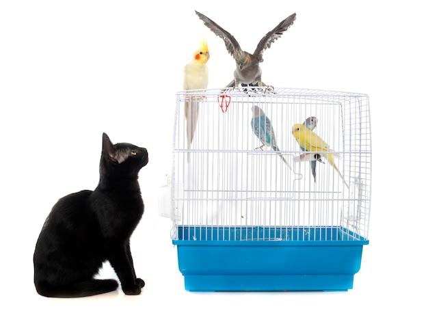 鳥と遊ぶ子猫