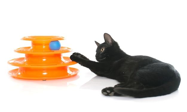 子猫がおもちゃで遊んで