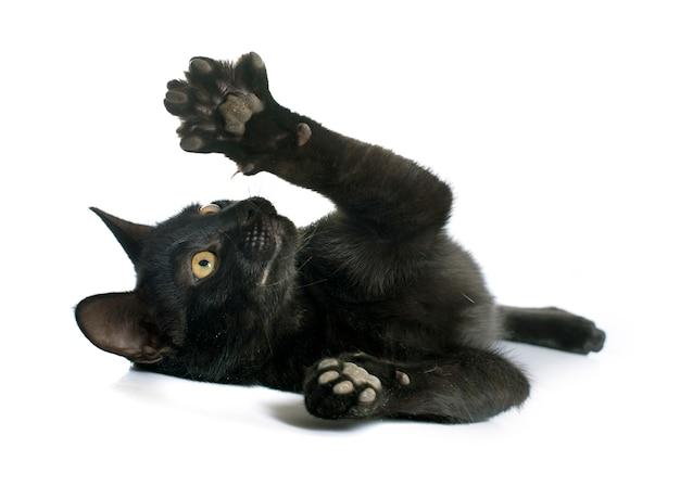 黒い子猫を演奏