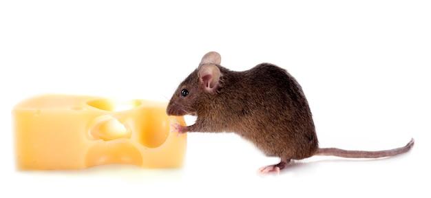 マウスとチーズ