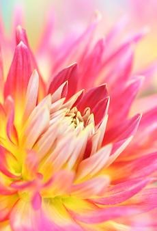 ダリアの花のクローズアップ