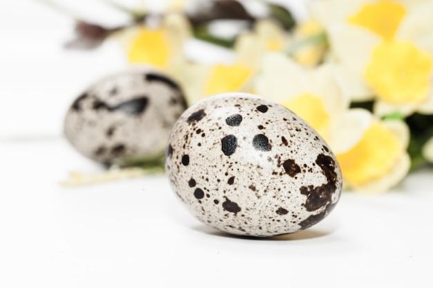ウズラの卵と水仙